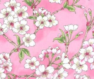 Sakura Park Blossom Flowers