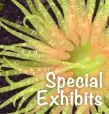 Special Exhibits at Northwest Quilting Expo