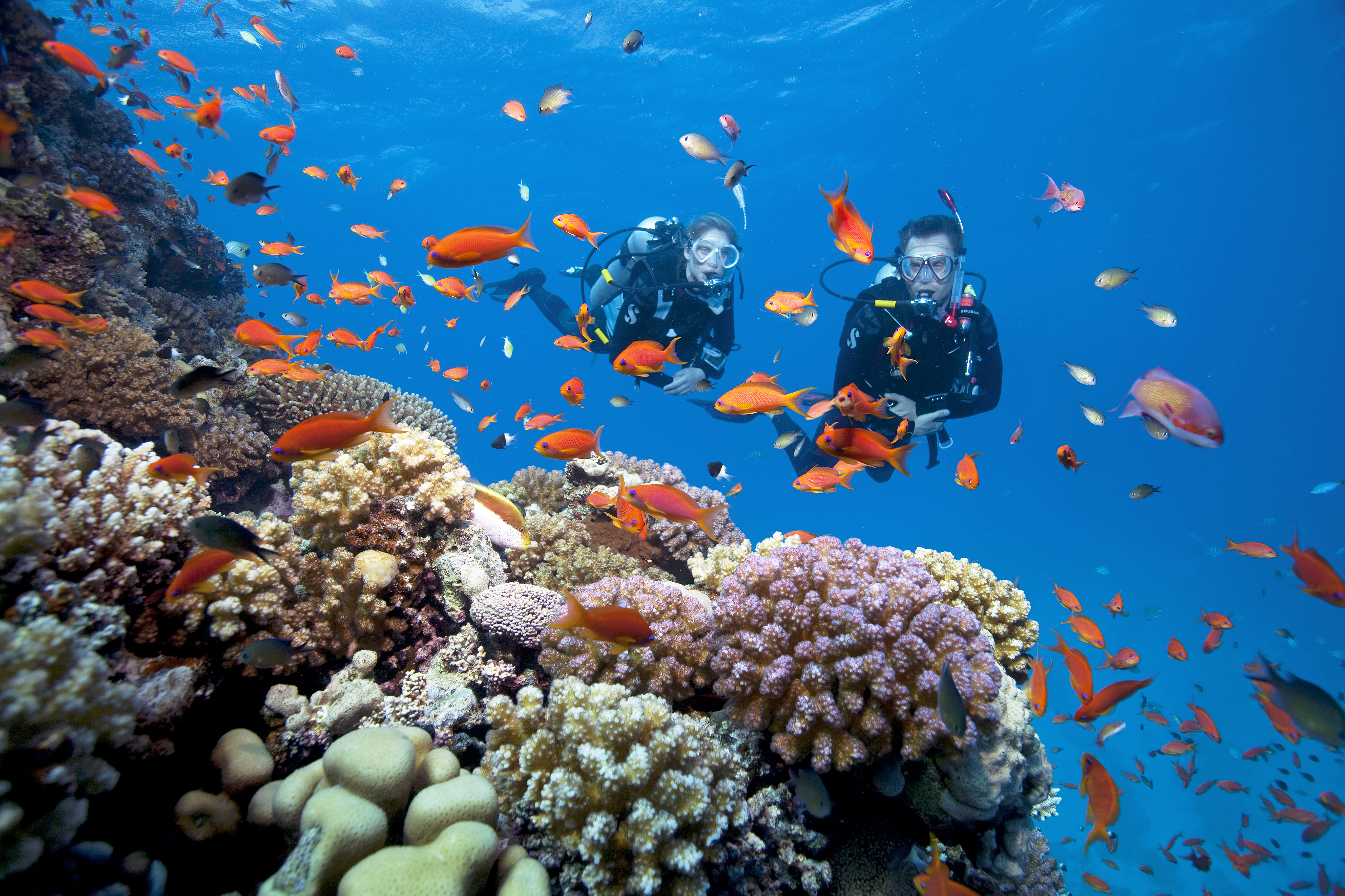 Reef with Divers