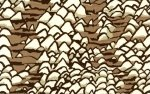 Brandon Mably Shell Scape  BM-14-BROWN