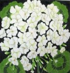 Giant White Geranium