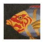 CL3624 - Wrasse / Red & Yellow