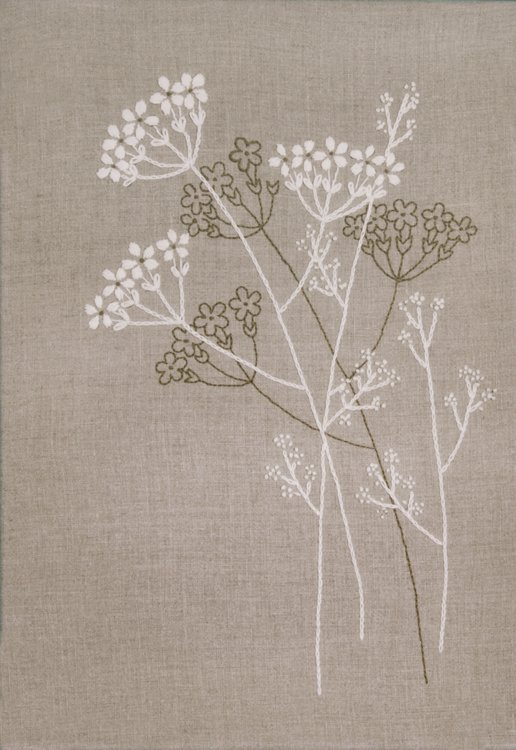 Queen anne s lace