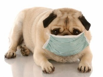 The best air purifier for pet allergies
