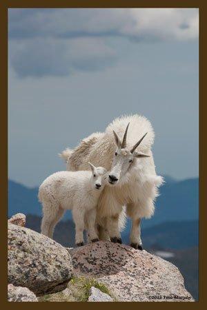 Mountain Goats Fabric Block