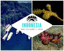 Indonesia: North Sulawesi 2018