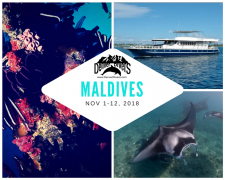 Maldives Liveaboard 2018