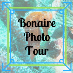 Bonaire Photo Tour