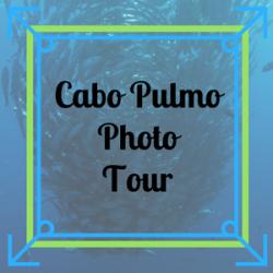 Cabo Pulmo Photo Tour