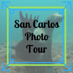 San Carlos Photo Tour