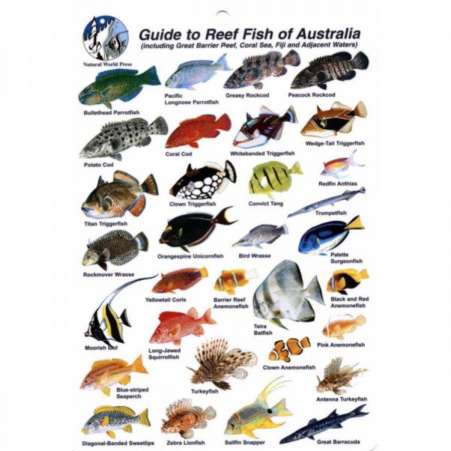 Species - fish.wa.gov.au