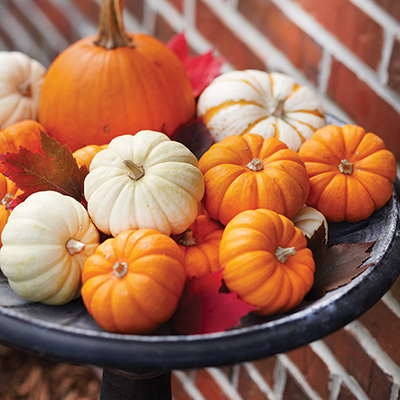 Pumpkins in birdbath