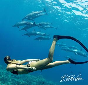 dolphin snorkel boat