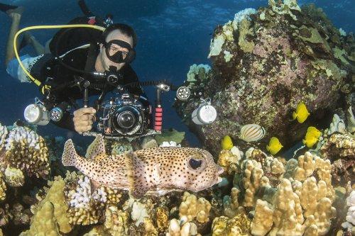 Jeff Milisen Underwater Photo Expert