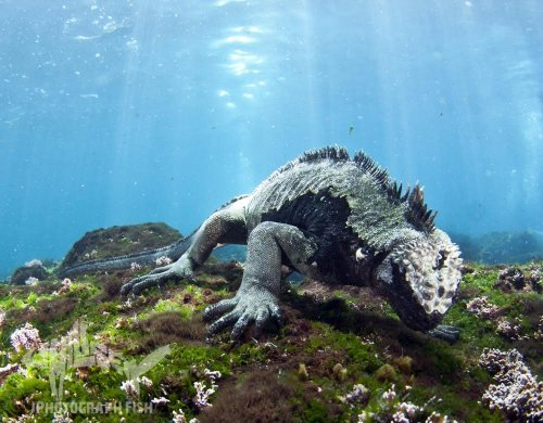 galapagos master live aboard dive trip