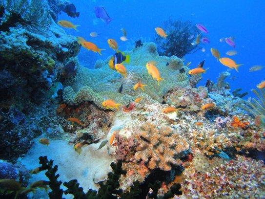 Paradise Taveuni Fiji dive resort
