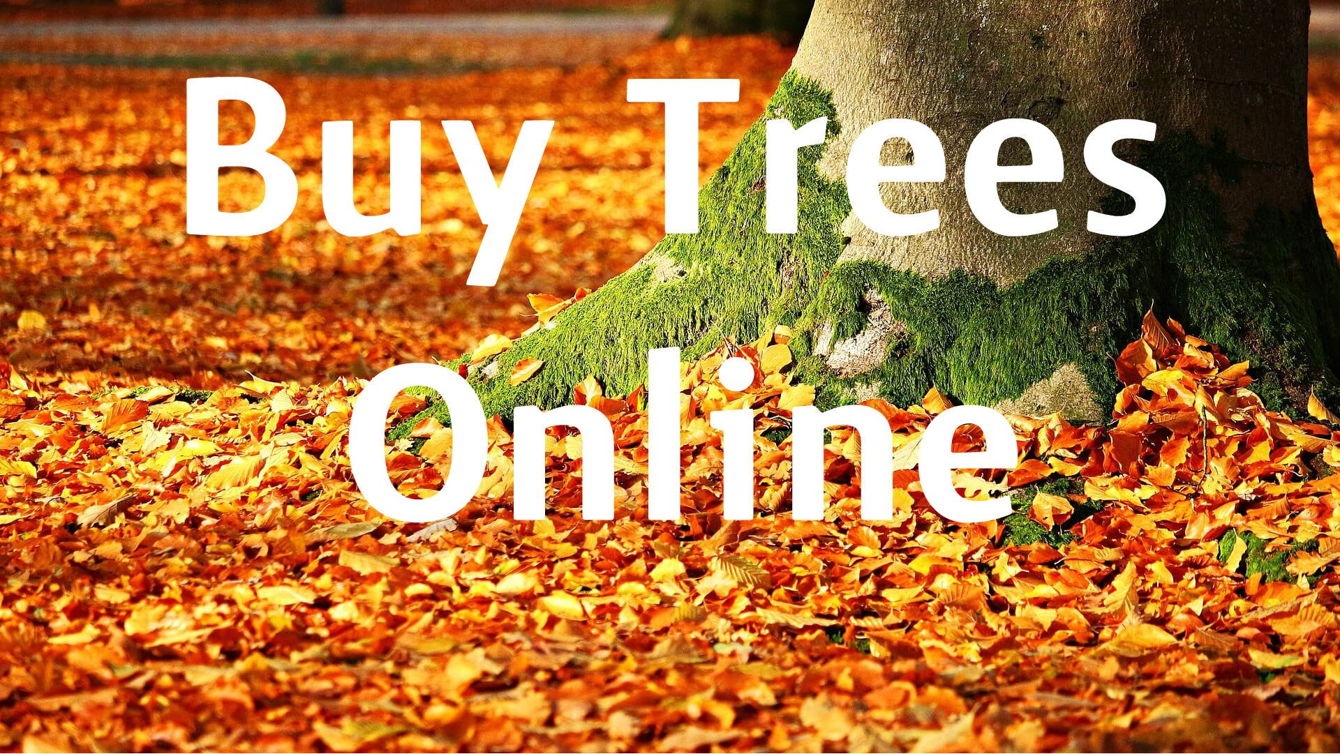 Buy Trees Online picture