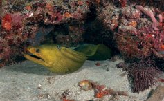 Moray Eel in Fort Lauderdale