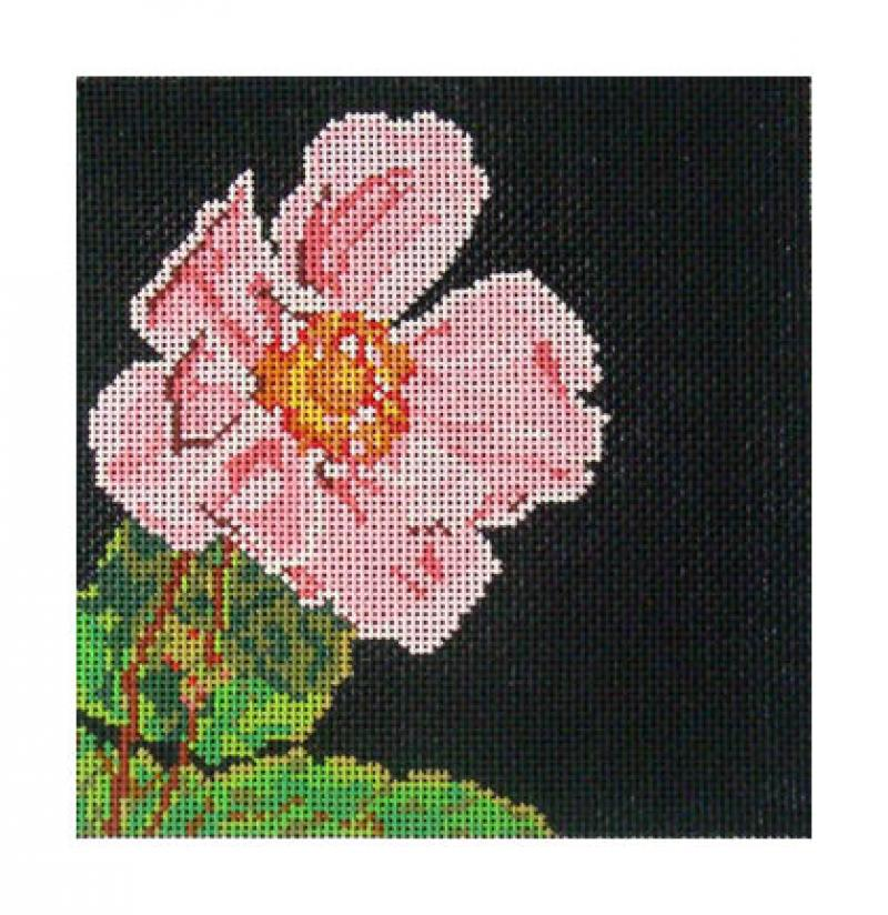DH3615 - Japanese Anemone