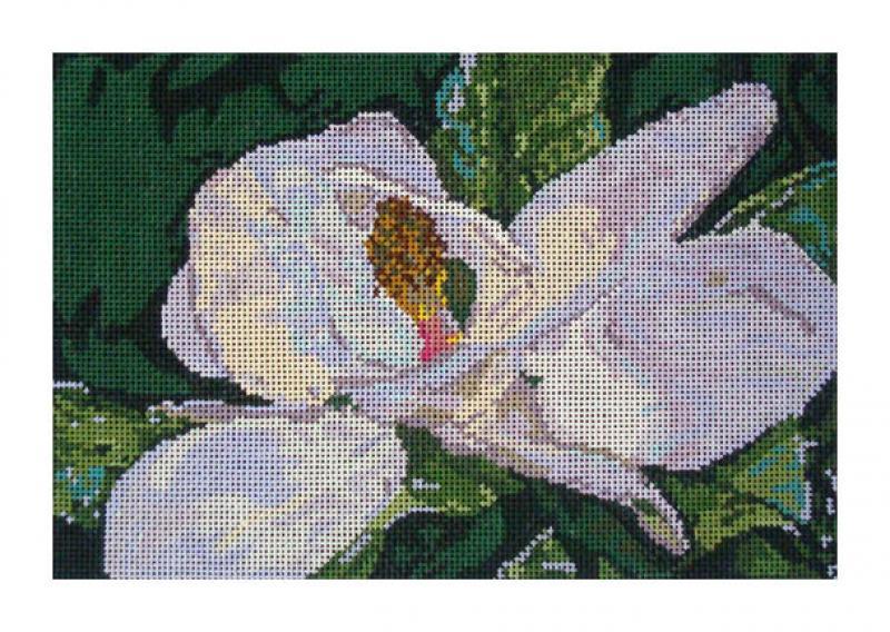 DH3678 - Magnolia