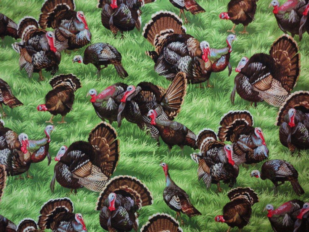 Backyard Bandits Turkey 112 11851