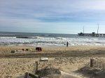 Jennette's Pier Surf Report
